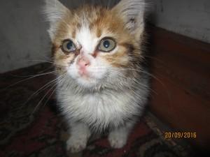 Парка - отважный котенок